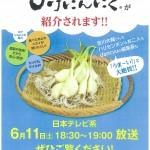 満天☆青空レストランに長岡の「ひげにんにく」が登場!